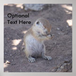 Praying Squirrel Poster Enlargement