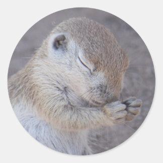Praying Squirrel Sticker