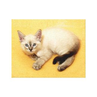Precious Baby Siamese Cat Resting Canvas Wrap Canvas Print