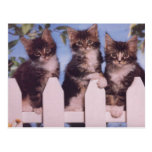 Precious Cat and Kitten Photo Cards, Gifts, Postag