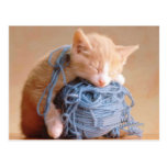 Precious Cat and Kitten Photos, Gifts - Customise! Postcards