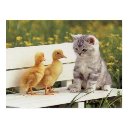 Precious Cats, Kittens Cards, Gifts -  Customize! Post Card