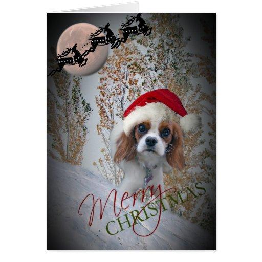 Precious Cavalier King Charles Christmas Cards