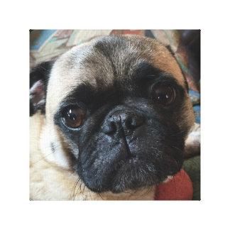 Precious Pug on Canvas Canvas Print