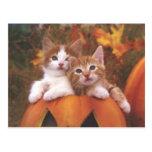 Precious Pumpkin Cats - Customisable Cards Postcard