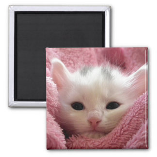 Precious White Kitten Fridge Magnets