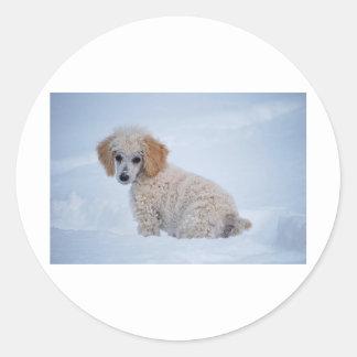 Precious White Poodle Puppy in Snow Classic Round Sticker