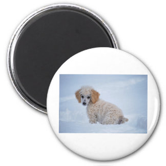 Precious White Poodle Puppy in Snow Magnet