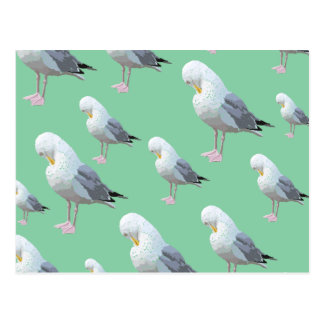 Preening Gull Pattern, Sketched Style on Green. Postcard