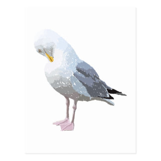 Preening Gull. Postcard