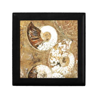 Prehistoric background with fossil shells gift box
