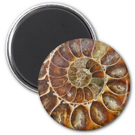 prehistoric fossil snail shell black animal nature magnet