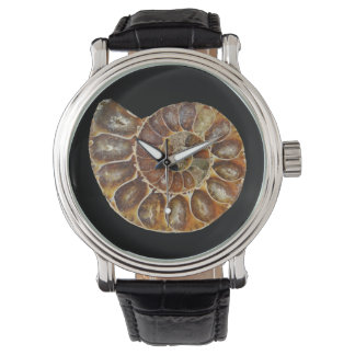 prehistoric fossil snail shell black animal nature watch