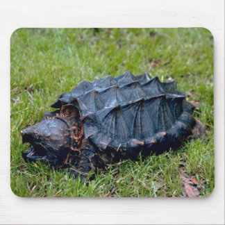 Prehistoric turtle Mousepad  Mouse Pad