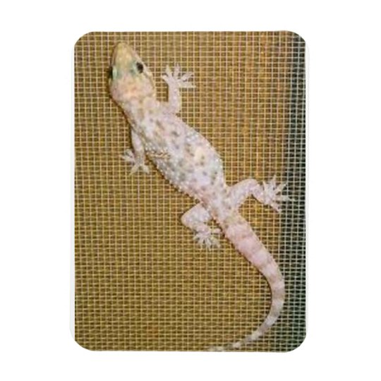 Premium Flexi Magnet  Florida House Gecko