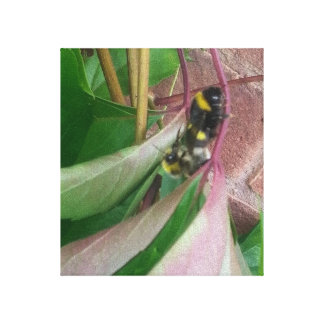 Premium Wrapped Canvas (Gloss) Bees Mating