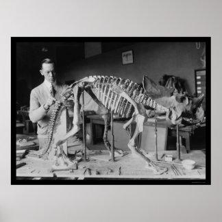Preparing a Baby Dinosaur Skeleton 1921 Posters