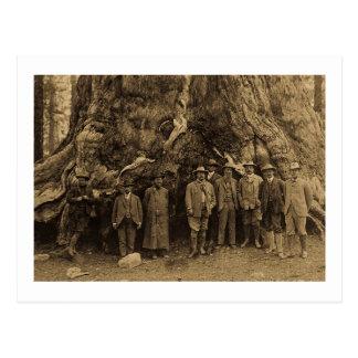 President Roosevelt and John Muir Beneath Sepia Postcards