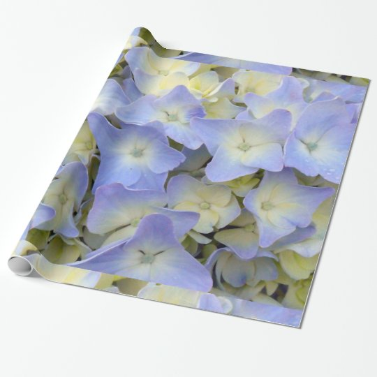 Pretty and Colourful Light Blue Hydrangea Flowers Wrapping