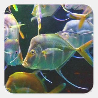 Pretty Aquatic Up Close School Of Fish Square Sticker