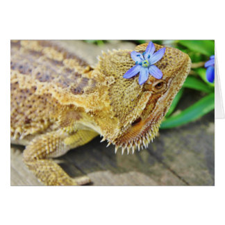 Pretty Bearded Dragon Card