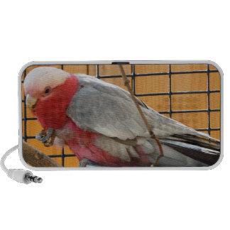 Pretty Bird Doodle Mini Speakers