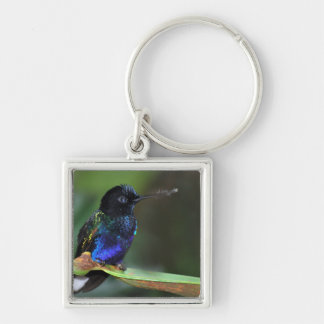 Pretty Black, Blue and Green Hummingbird Silver-Colored Square Key Ring