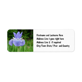 Pretty Blue Indigo Siberian Iris Flower Bloom