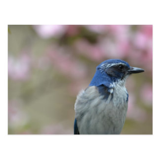 Pretty Bluebird Postcard