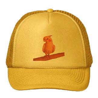 pretty boy cap