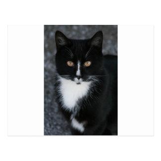 Pretty Boy Tuxedo Kitty Postcard