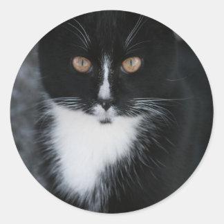 Pretty Boy Tuxedo Kitty Round Sticker