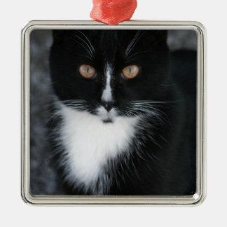 Pretty Boy Tuxedo Kitty Silver-Colored Square Decoration