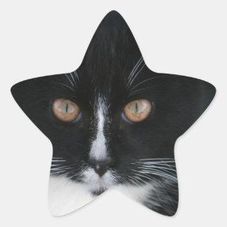 Pretty Boy Tuxedo Kitty Star Sticker