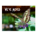 Pretty Butterfly New Address Nature Postcard