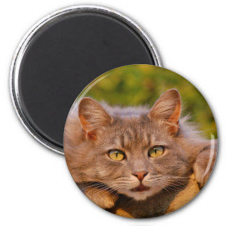 Pretty Cat and its Look 6 Cm Round Magnet