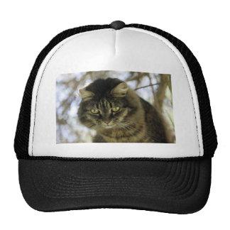 Pretty Cat on a Tree Mesh Hats