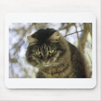 Pretty Cat on a Tree Mouse Pads