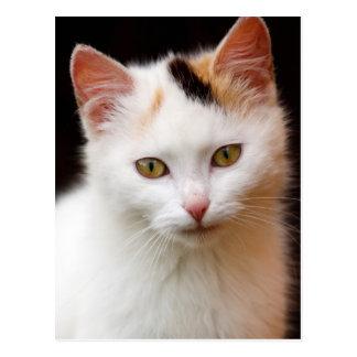 Pretty Cat Postcard
