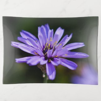 Pretty Chicory Flower Trinket Tray