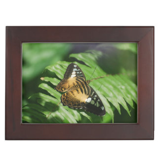 Pretty Clipper Butterfly Memory Boxes