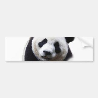 Pretty Close-up Panda Artwork Bumper Sticker
