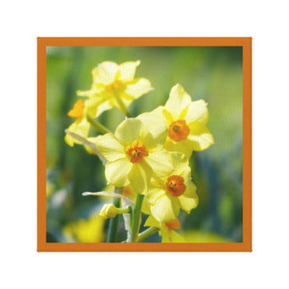 Pretty Daffodils, Narcissus 03.1 Canvas Print