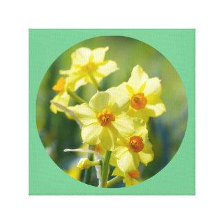 Pretty Daffodils, Narcissus 03.2_rd Canvas Print