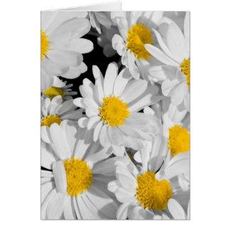 Pretty Daisies Greeting Card
