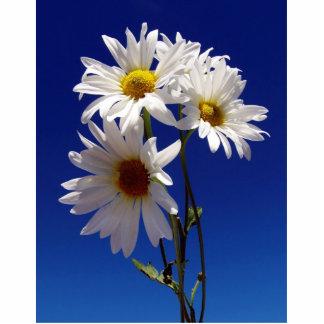 Pretty Daisies Magnet Photo Cutouts