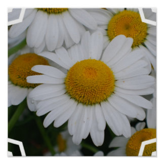 Pretty Daisies Poster