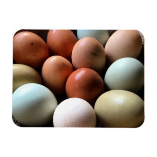 Pretty Eggs From Chicken Farm Magnet