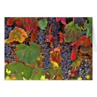 Pretty Fall Wine Vineyard Note Cards Blank