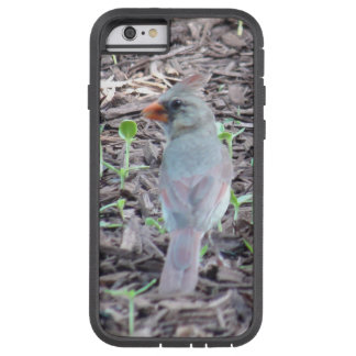 Pretty Female Cardinal Cell Phone Case